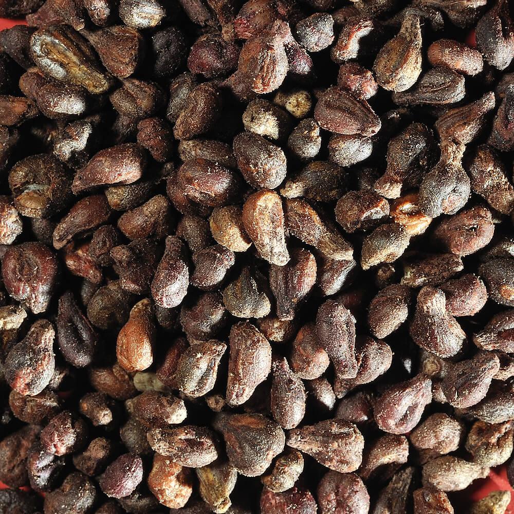 La transformation des pépins de raisins et ses bienfaits