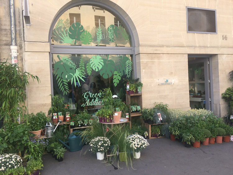 Magasin Truffaut, plantes